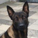 Profielfoto van patjodie